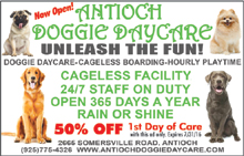 Doggie-Daycare-07-16