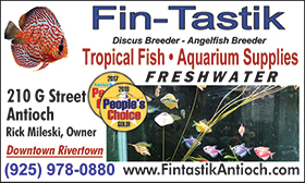 Fin-Tastik-Biz-Card-08-19Left