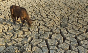 Drought 300x180 Writer asks Is anyone paying attention?