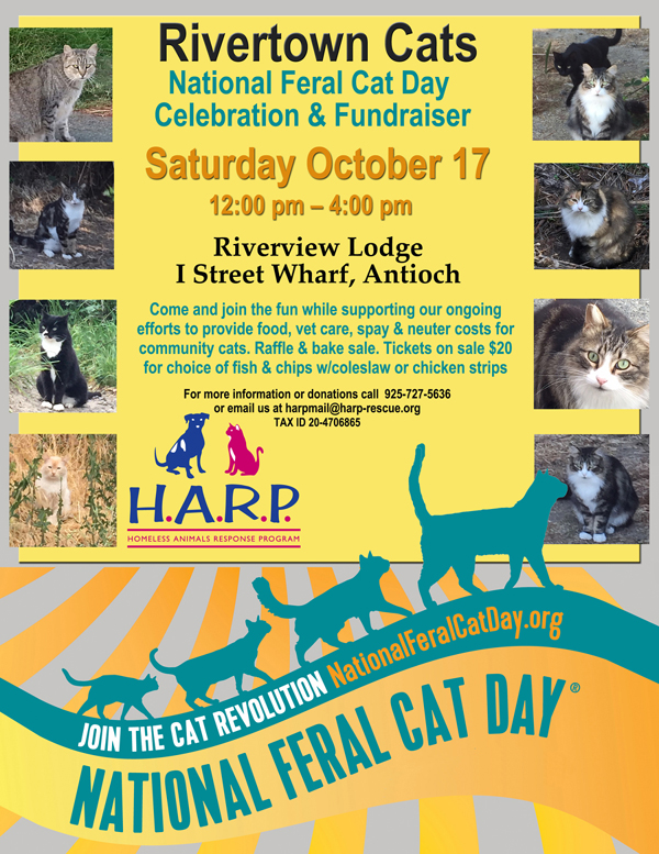 Feral_Cat_Day_Flyer_web