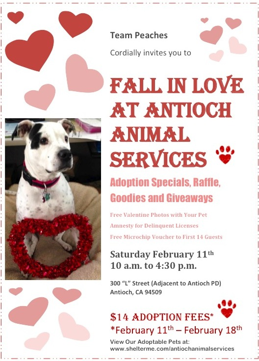 Feb Animal Services