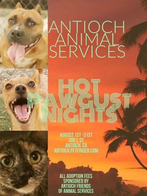 pets animals antioch herald